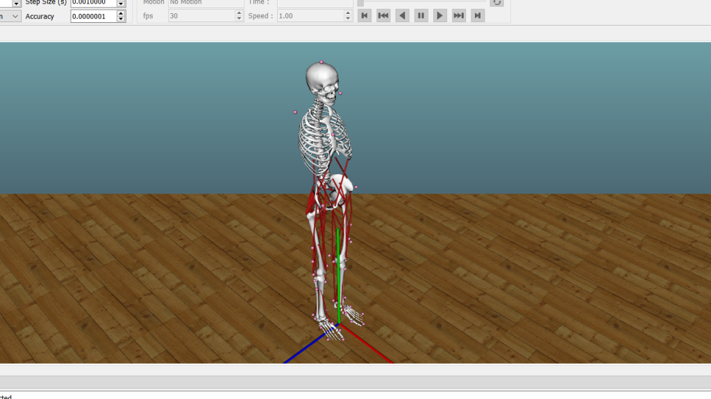 A skeleton with simulated muscles